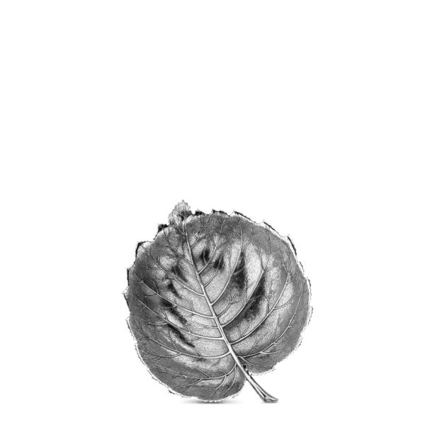 Leaf Hazelnut II