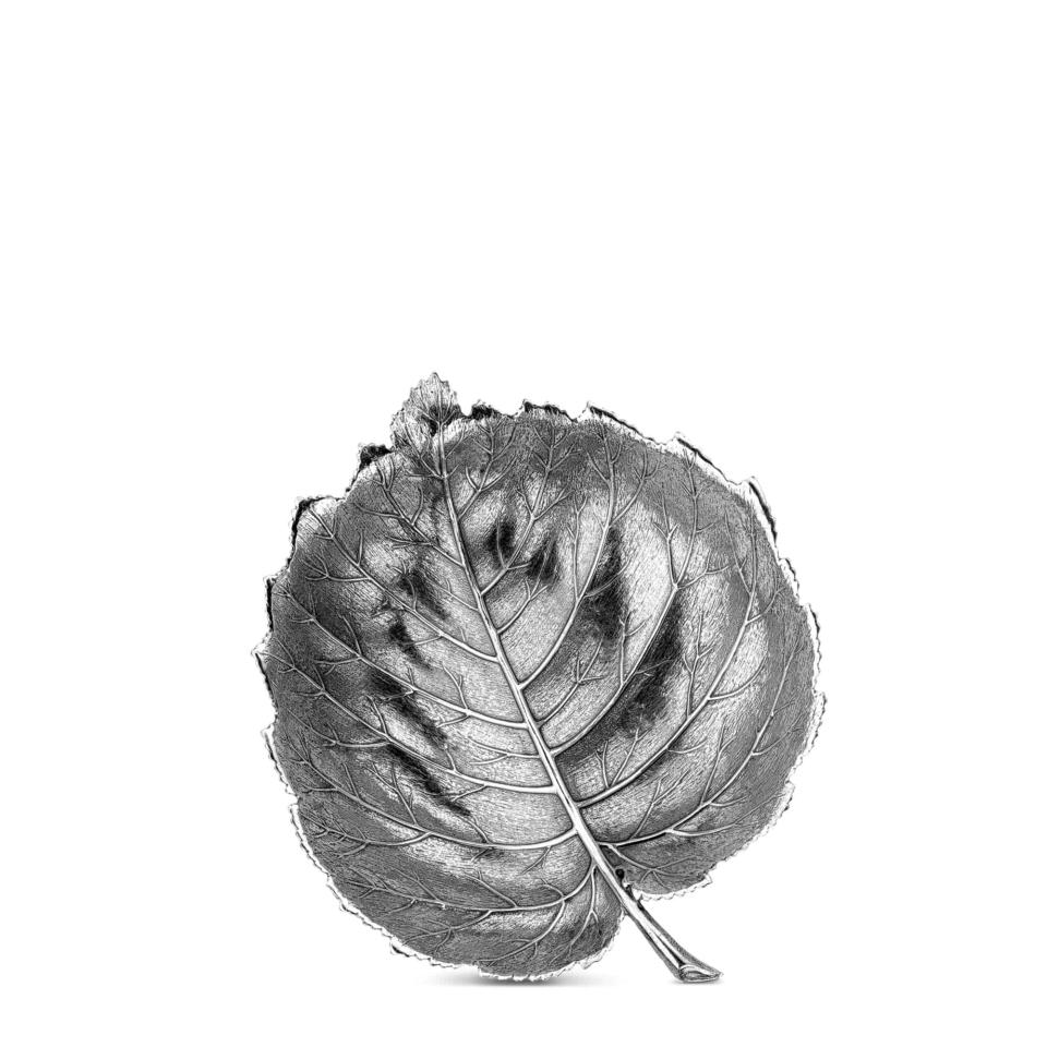 Leaf Hazelnut III